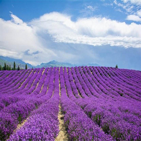 Plant Bath Salts 300Pcs Italian Lavender Flower Essence AN-ZZ32-300