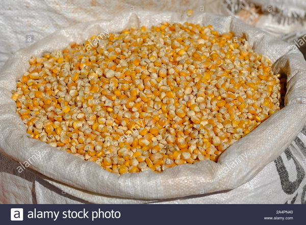Yellow CORN Maize 25 kg