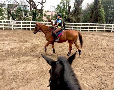 Weekend Horse-Riding at Lo Wu Saddle Club