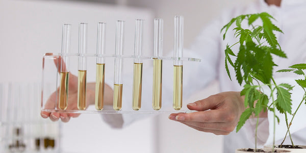 The Importance of Lab Testing & Certification with CBD Products