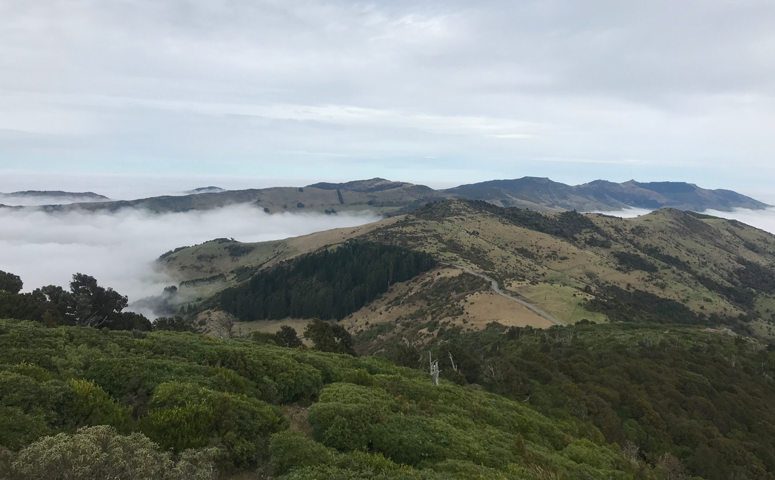 Banks Peninsula Adventure Race!