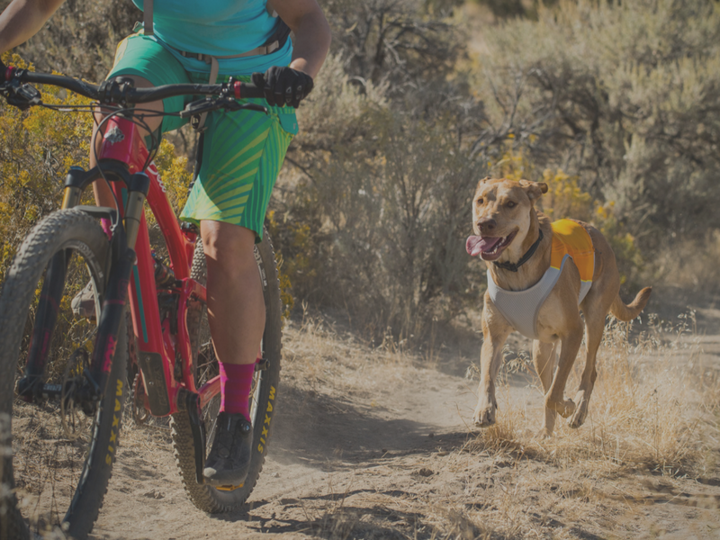 Adventure Dog Gear | Outdoor Gear for your Active Dog NZ