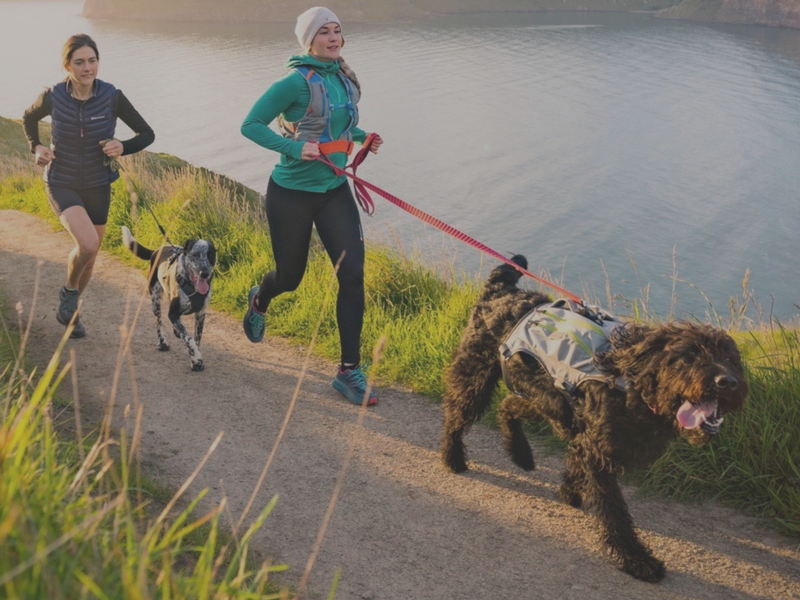 Trail Running with Dogs