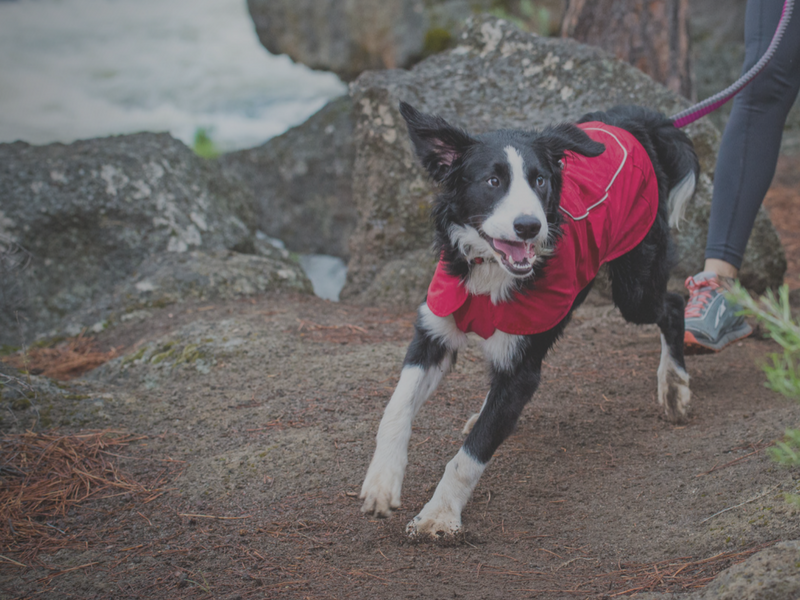 Waterproof Jackets for Dogs