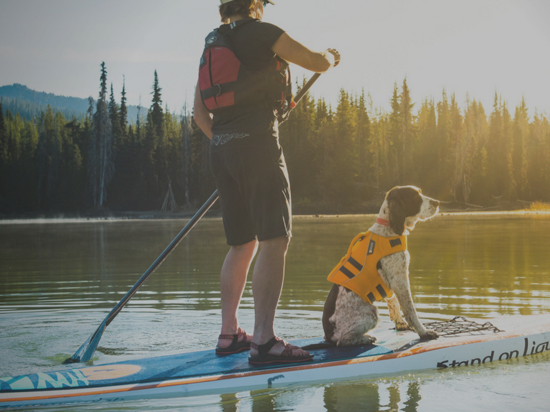 Paddling with Dogs