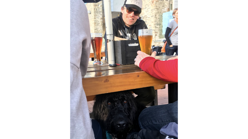 dog friendly bars in wanaka