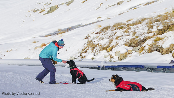 Rosko training with NZLandSAR at OHAU ski fields
