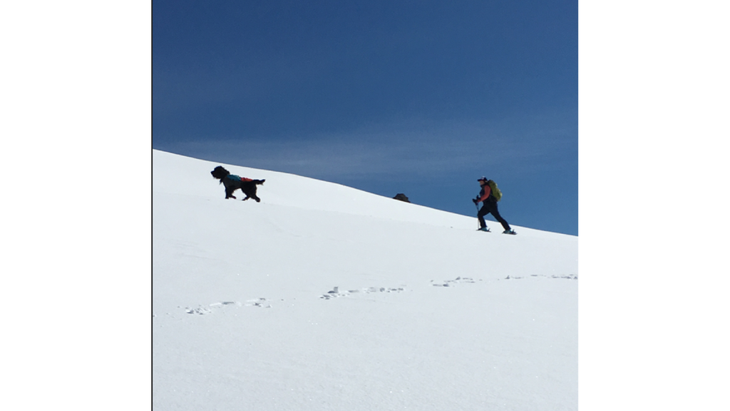 julz ski touring with badger the dog
