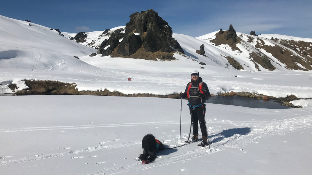 ski and snow shoeing with dogs in new zealand