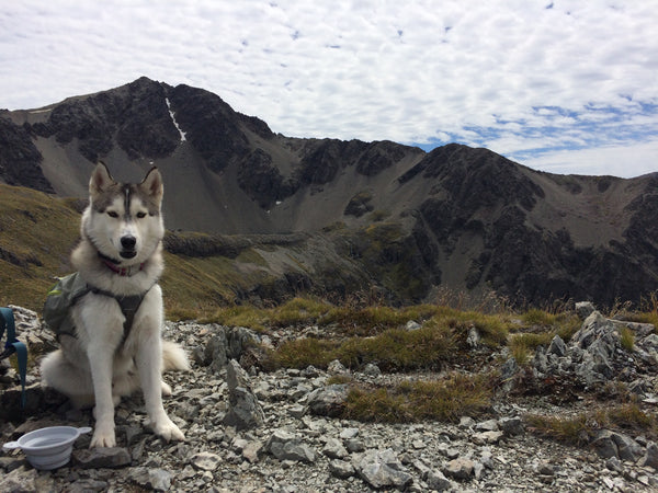 Dog up a mountain