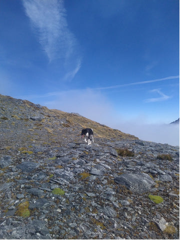 high country hiking with dog