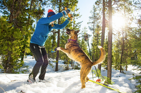 play with dog ruffwear boots