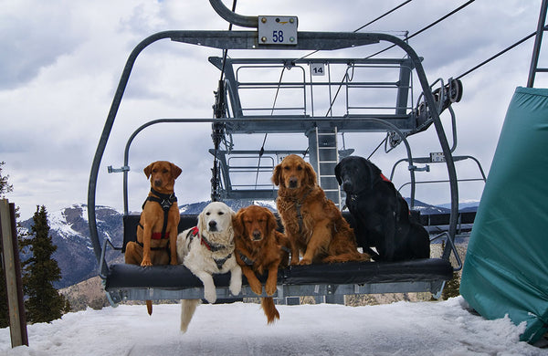 Taos Avalanche dogs