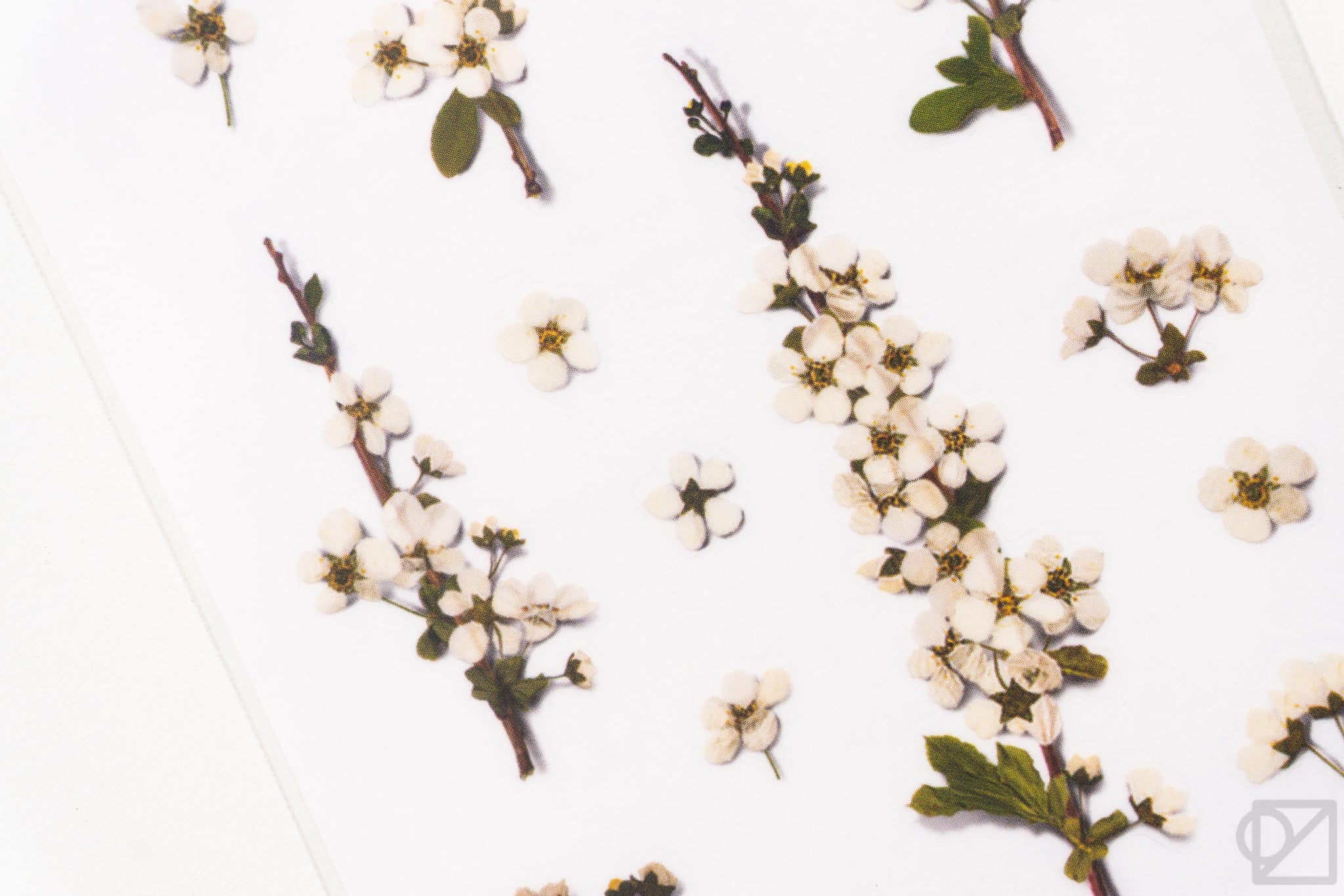 Pressed Flower Stickers Bridal-wreath Spirea