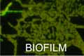 Biofilm before treatment