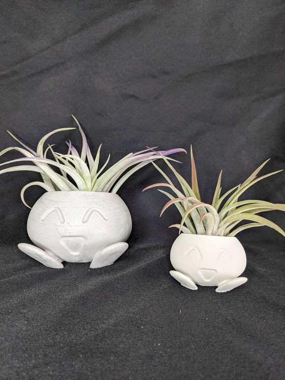 Small Oddish Air Plant Terrarium