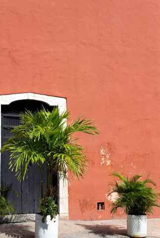 palms-against-a-red-plaster-wall