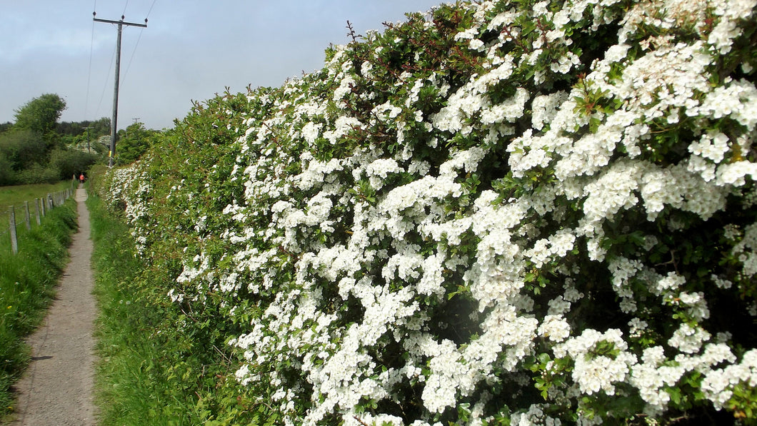 Native Hedging