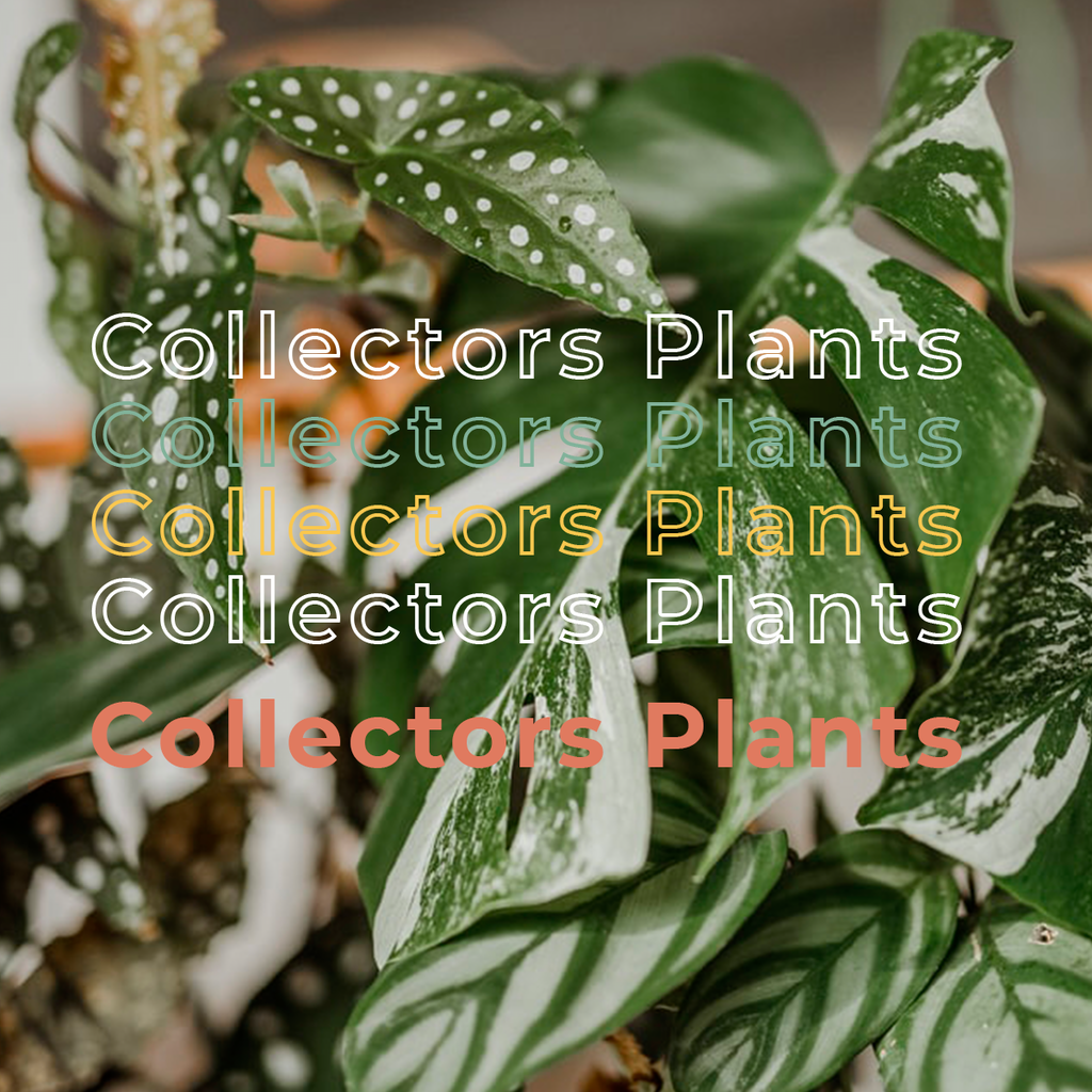 Collectors Plants