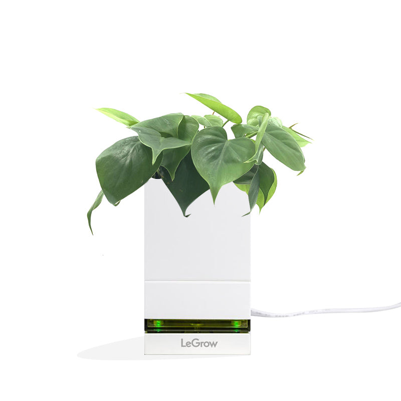 LeGrow USB Charging Dock with Philodendron