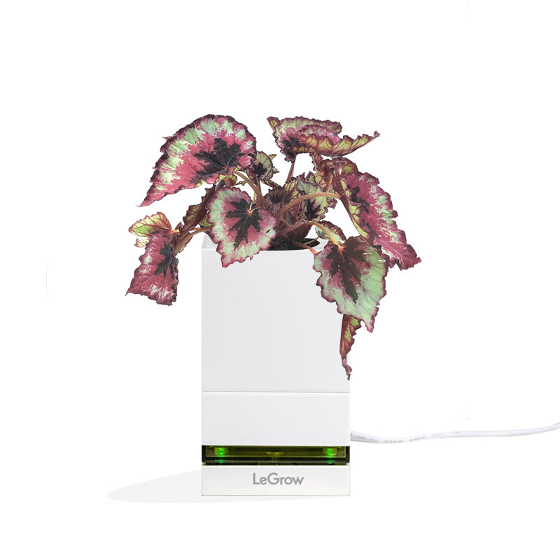 LeGrow USB Charging Dock with Begonia Leaf