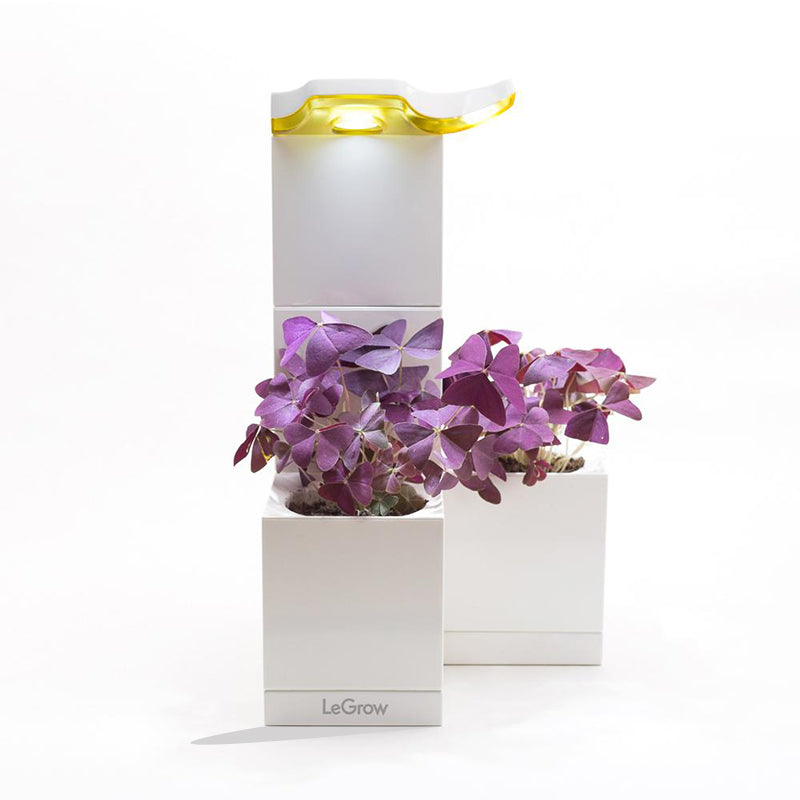 LeGrow LED Lamp Set with Oxalis