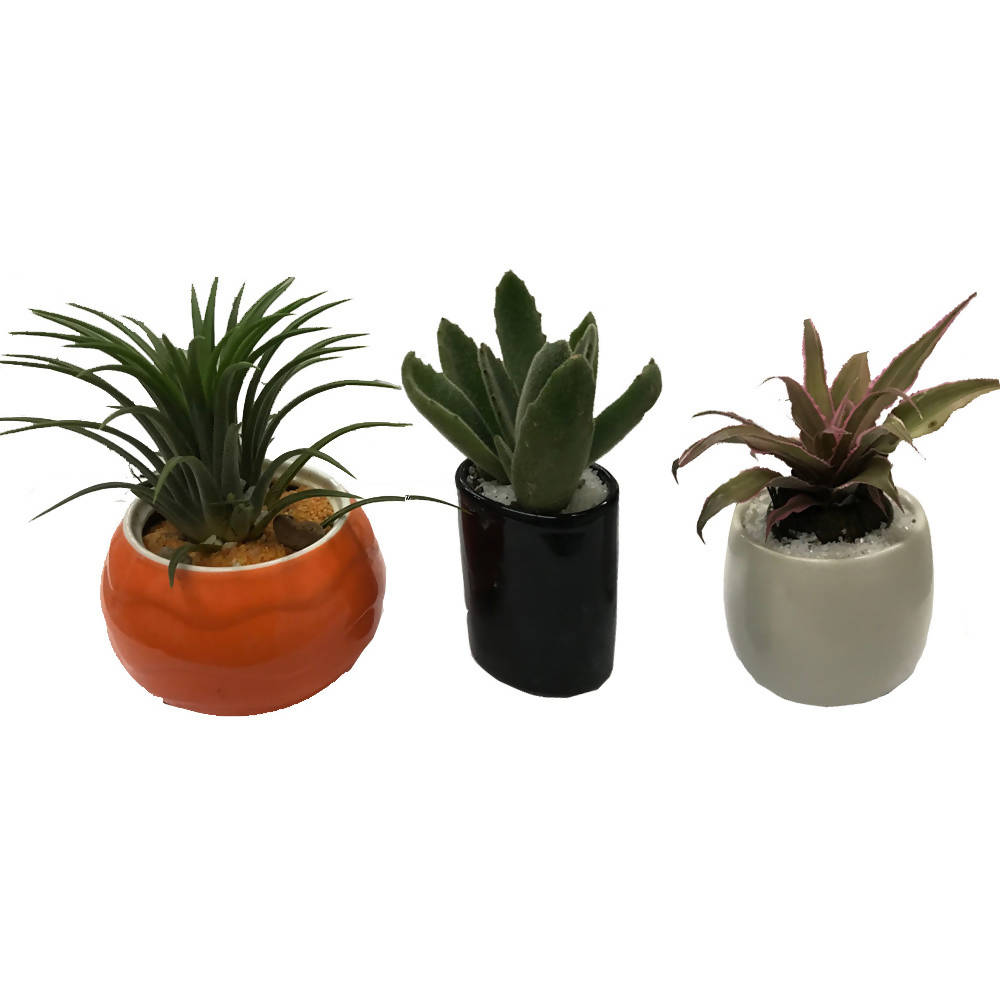 Succulents Package Orange Black White