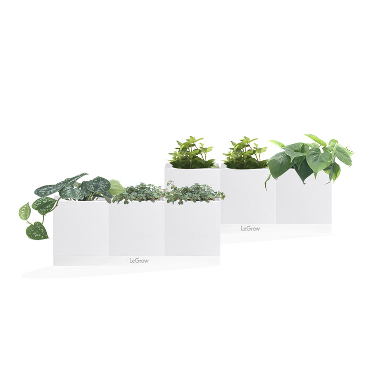 LeGrow 6-in-1 with Assorted Plants (A)