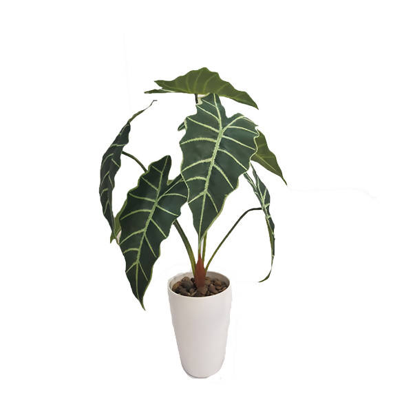 Artificial Potted Alcoasia (0.7m)