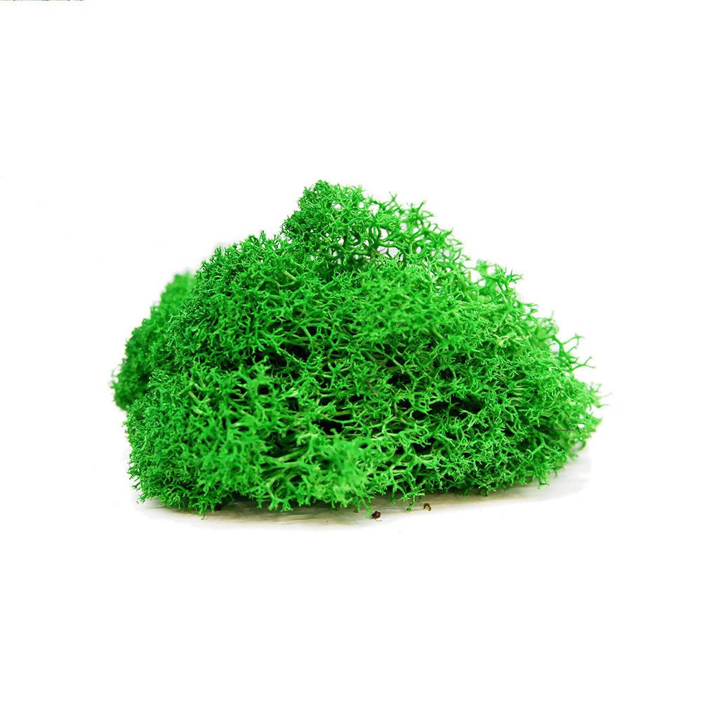 Reindeer Moss Assorted Colours - White wooden frame 30cm x 30cm