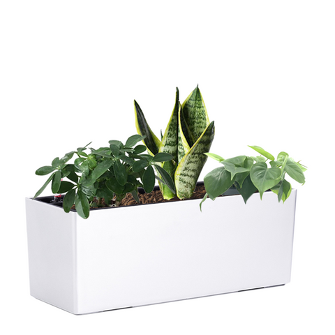 Martha 70cm With Assorted Plants, Type B in White