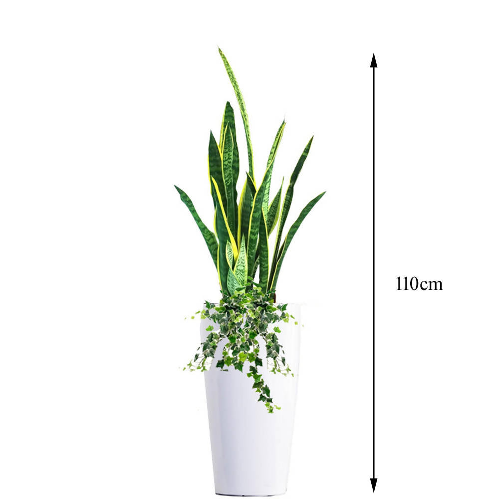 Sansevieria, Snake Plant with peperomia/lipstick/ivy plant in M white tall pot