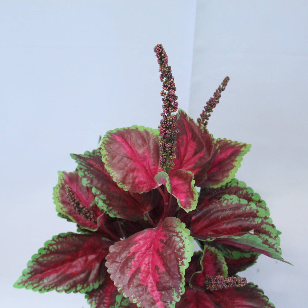 Artificial Burgundy Coleus Bush with White Pot (0.70m)