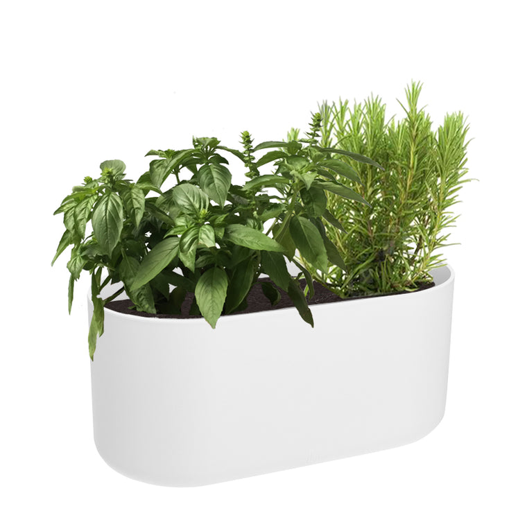 B. For Soft Duo 27cm White with Sweet Basil & Rosemary