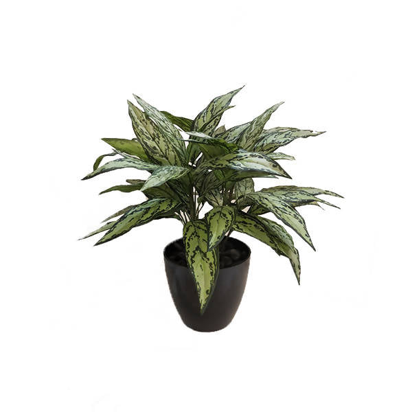 Artificial Potted Silver Queen Plant (0.70m)