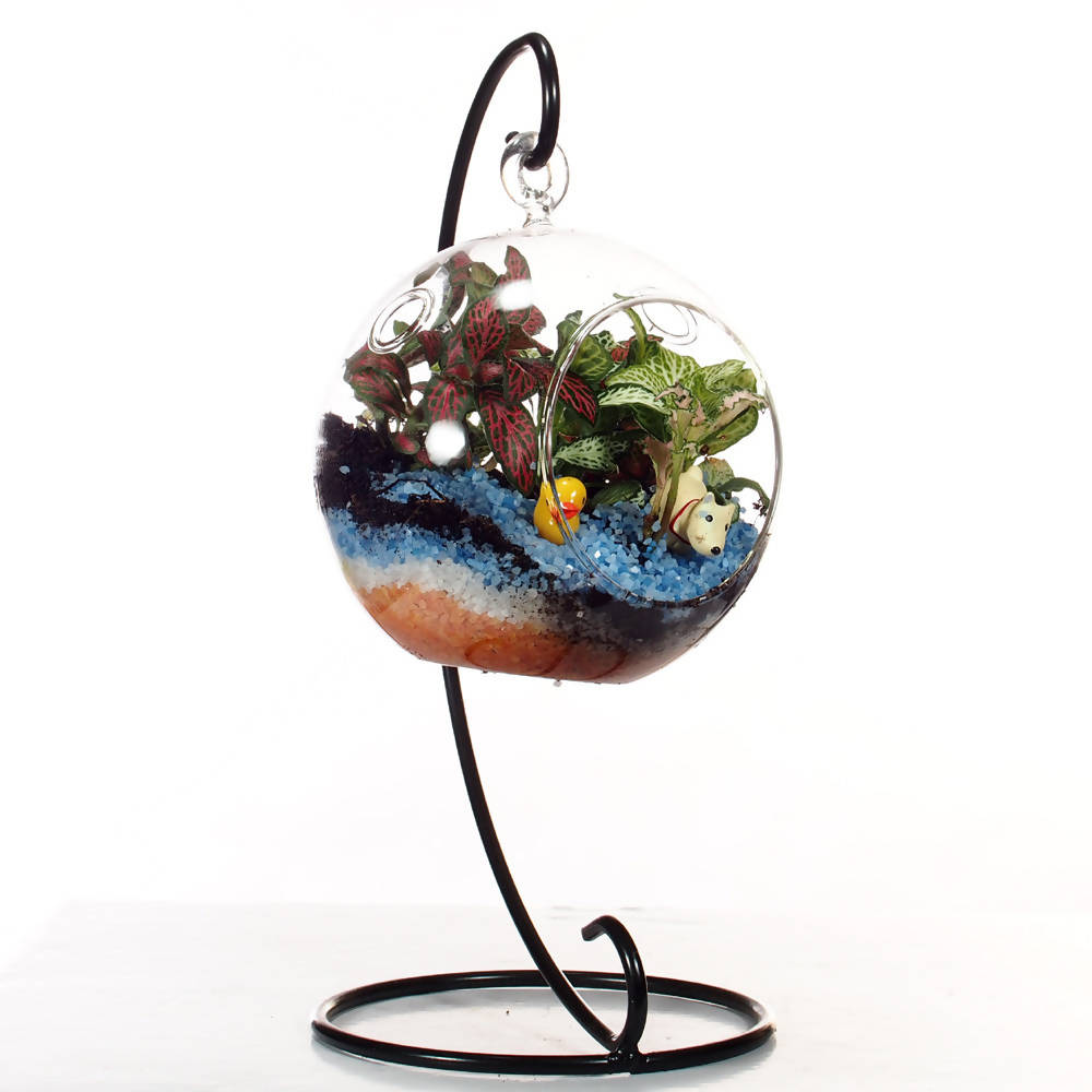 Mini Terrarium (assorted design)