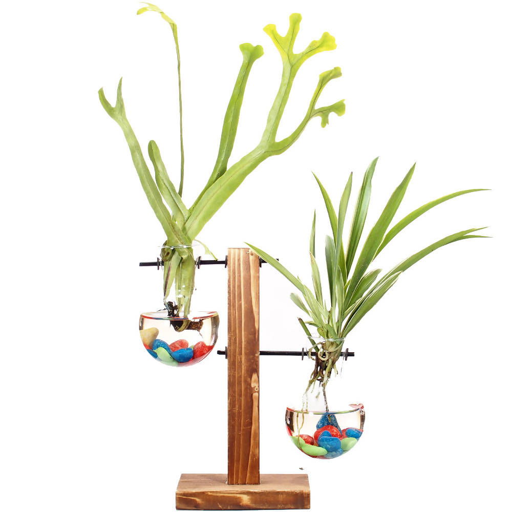 Assorted Plants in Water Culture Test Tube Vase Series A