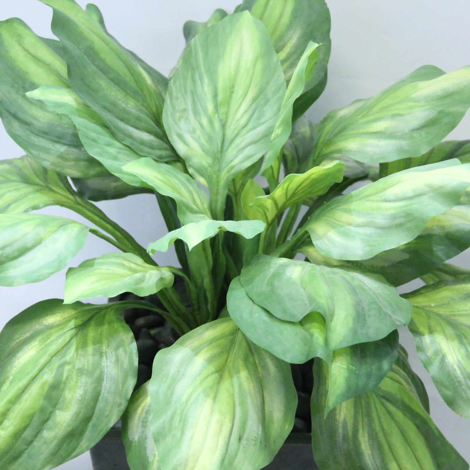 Artificial Varigated Hosta Plant with Dark Grey Pot (0.65m)
