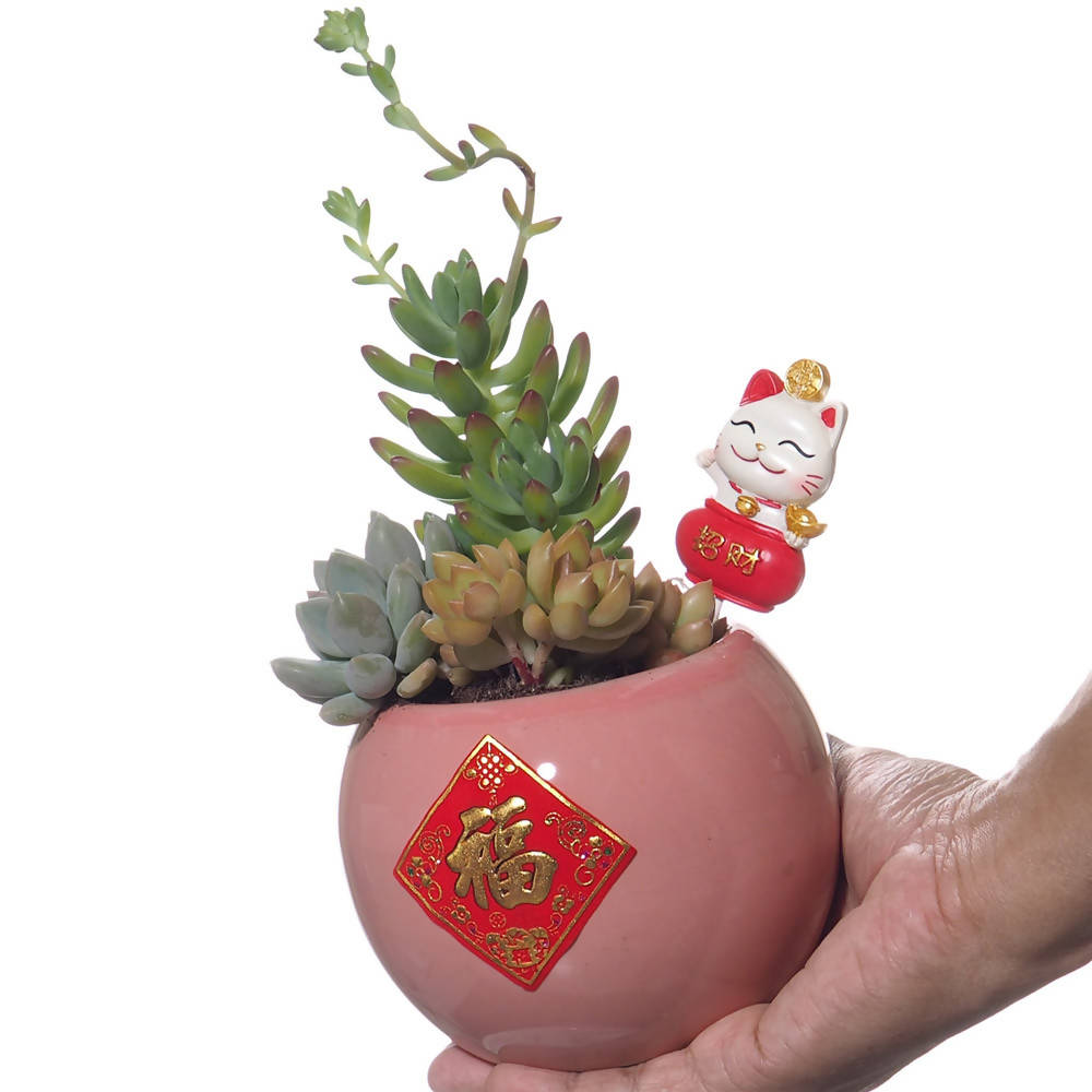Chinese New Year Succulent Gift Set (0.25m)