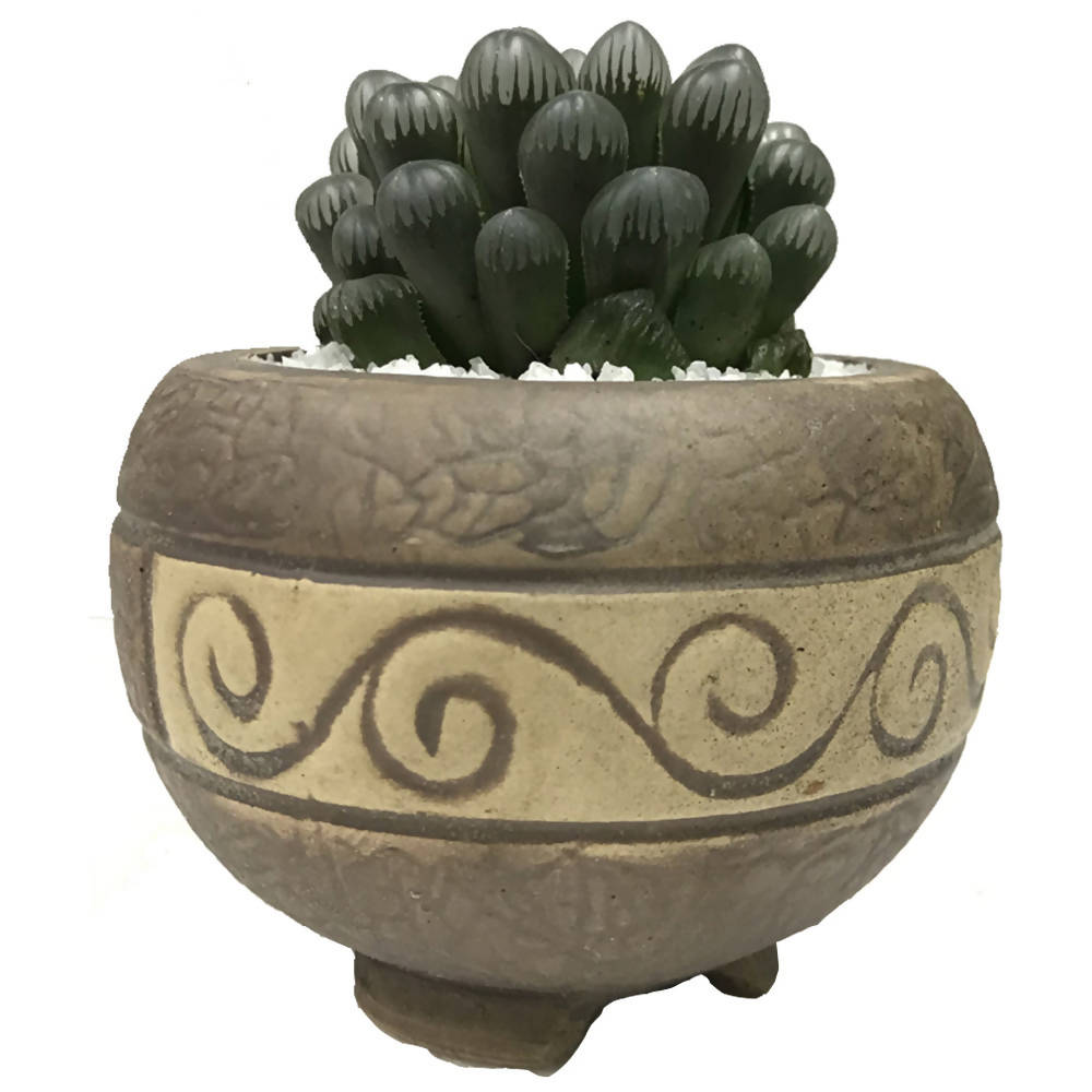 Single Succulent Arrangement in Classical Clay Pot