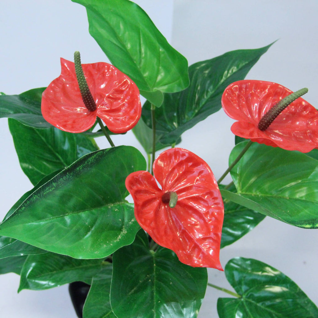 Artificial Anthurium with Black Pot (0.55m)