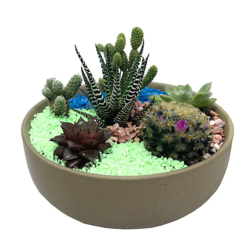 Assorted Succulent Arrangement in Dark brown with white Pot