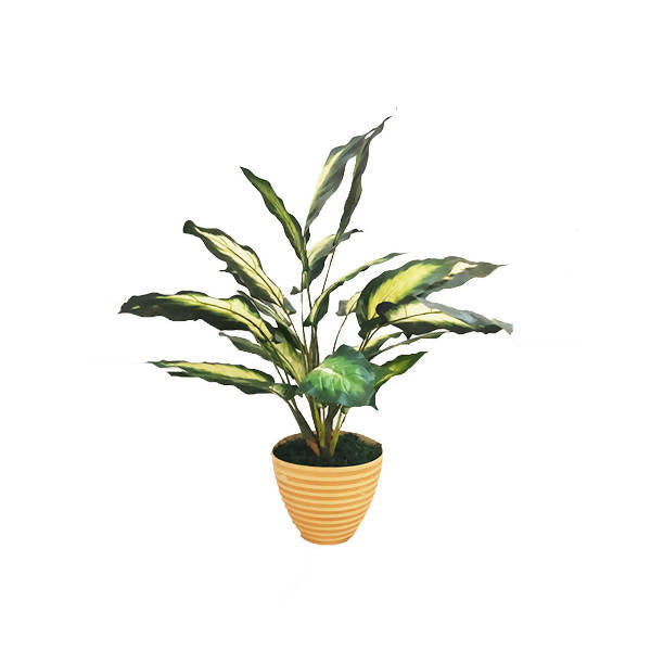 Artificial Dieffenbachia with Brown Pot (0.7m)