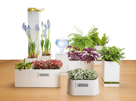 LeGrow LED Lamp Set with Cryptanthus