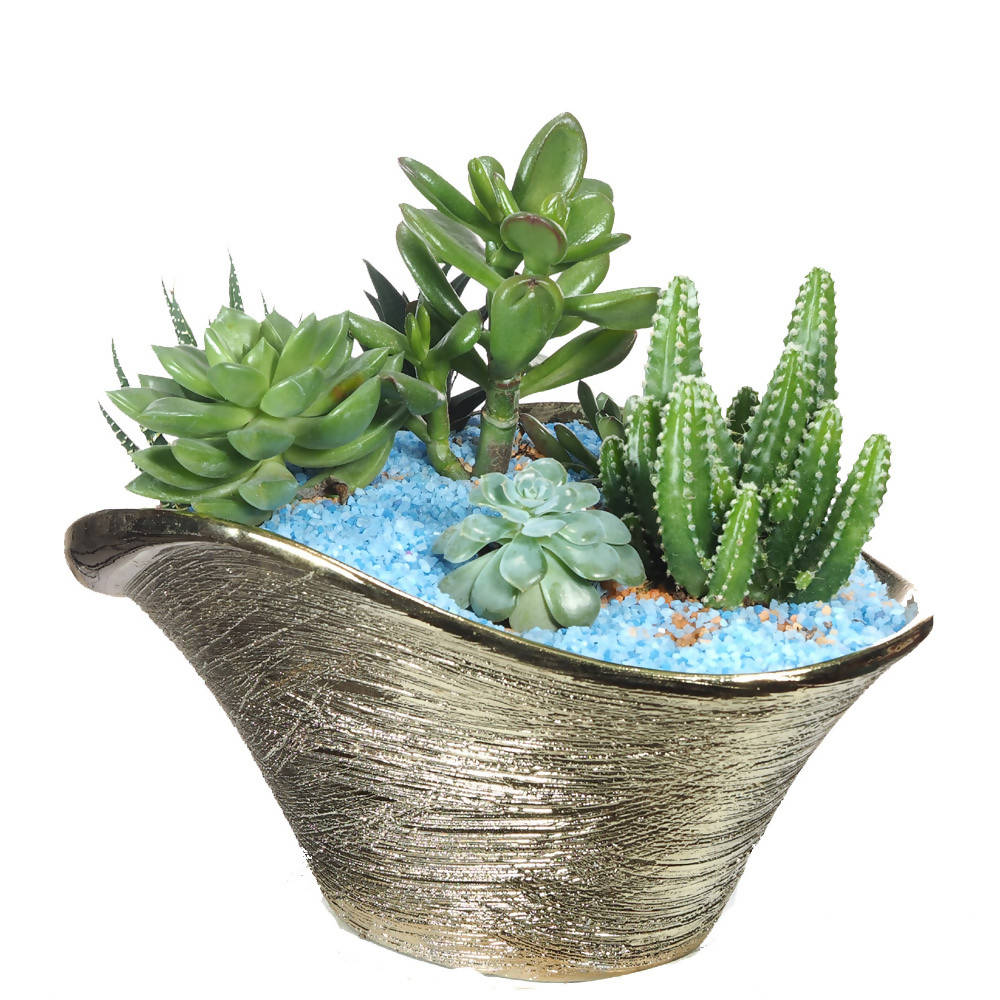 Assorted Succulent Arrangement in Gold Pot