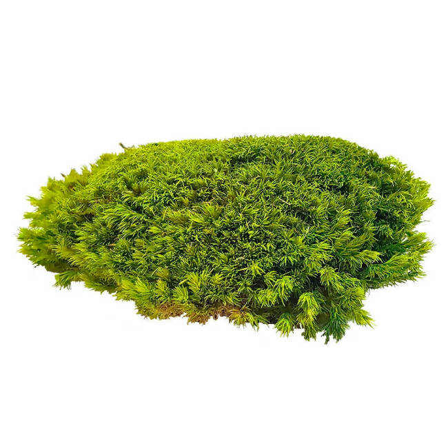 Pole Moss Assorted Colours - Wall Panel (1m x 1m) Quick Installation