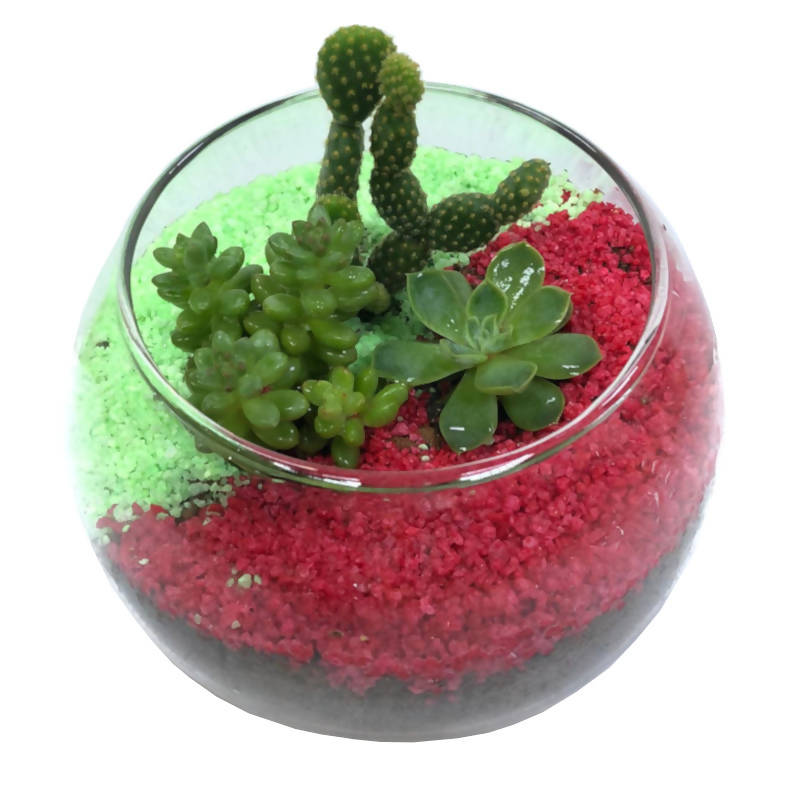 Assorted Succulent Arrangement in Glass Bowl