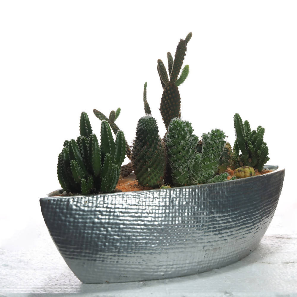 Assorted Succulent Arrangement in Silver Boat Pot
