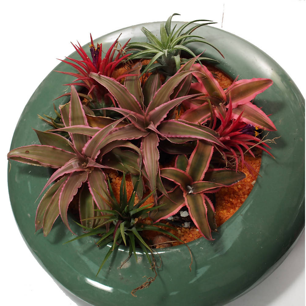 Cryptanthus, Tillandsia ionantha arrangement in Jade Green Bowl