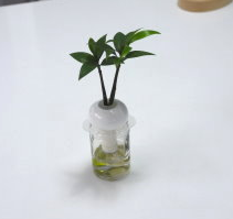 Hydroponic Bonsai in Cute Vase